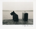Dog with suitcase - 1982