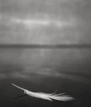 Feather on Water 2007