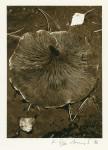 Mushroom - 1986